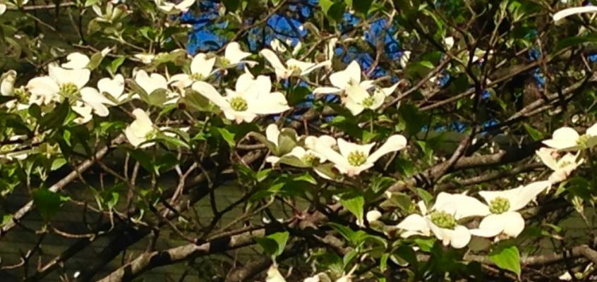 The Dogwood Tree: Amazing Easter Poem – Never Again