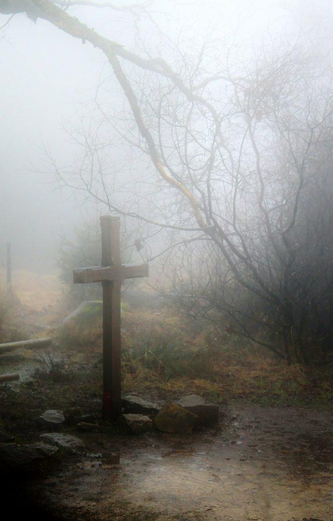 Fog Autumn Forest Nature Mood