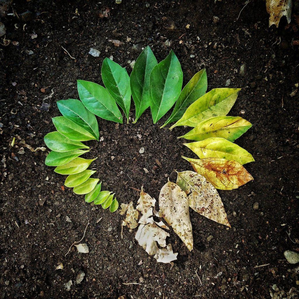 Leaf Flora Soil Garden Nature