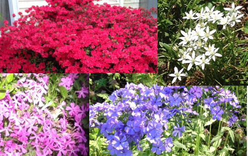 Spring: You See How to Create a Lavishly Visual Rebirth in Your Yard