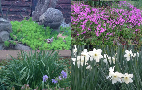 Amazing Spring Flowers that Surprise Me in March